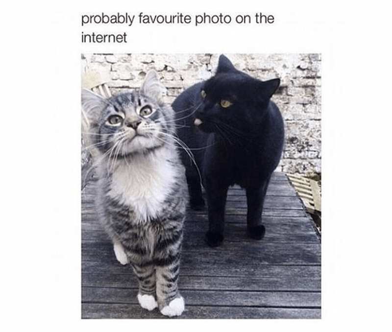 funny cat meme of 2 cats posing for pic and one is sticking his tongue out at the other.
