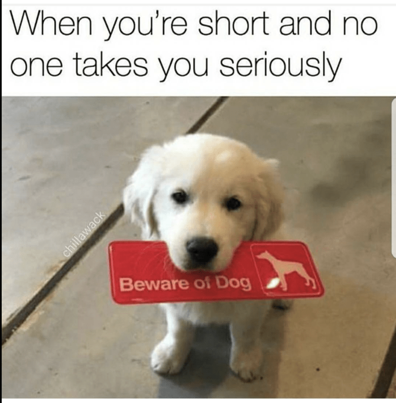 Tiny puppy holding a beware of dog sign.