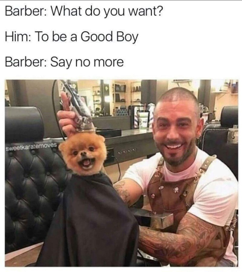 Dog getting a good boy haircut.