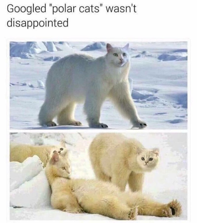 Funny meme baout googling giant polar cats, result is polar bears with cute white cat heads.