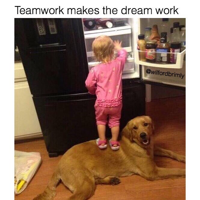Funny meme about teamwork, kid standing on dog to get into fridge.