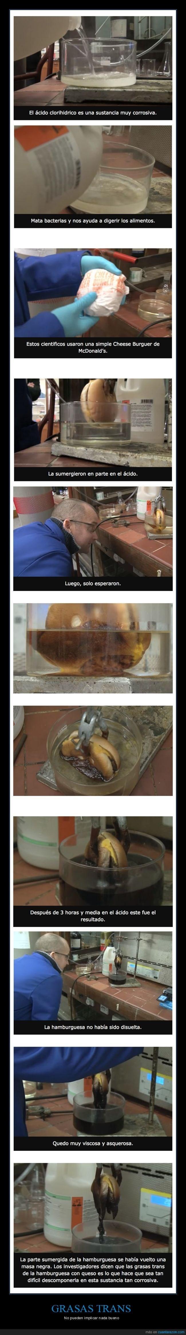 experimento que le hicieron las hamburguesas en el mac donalds