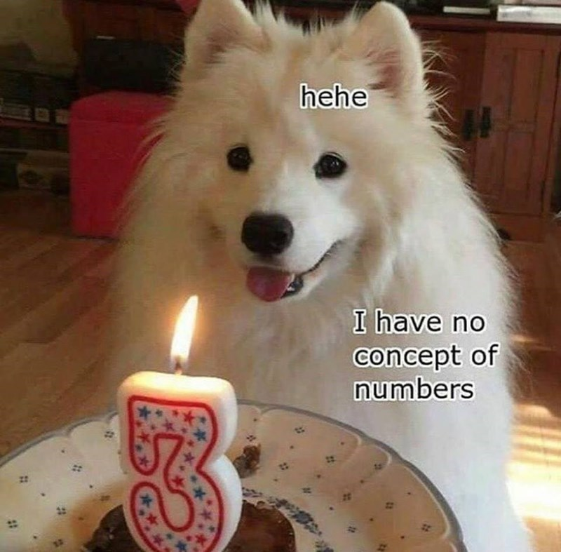 Dog looking clueless in front of a birthday cake