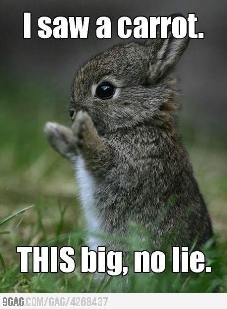 Image result for rabbit meme