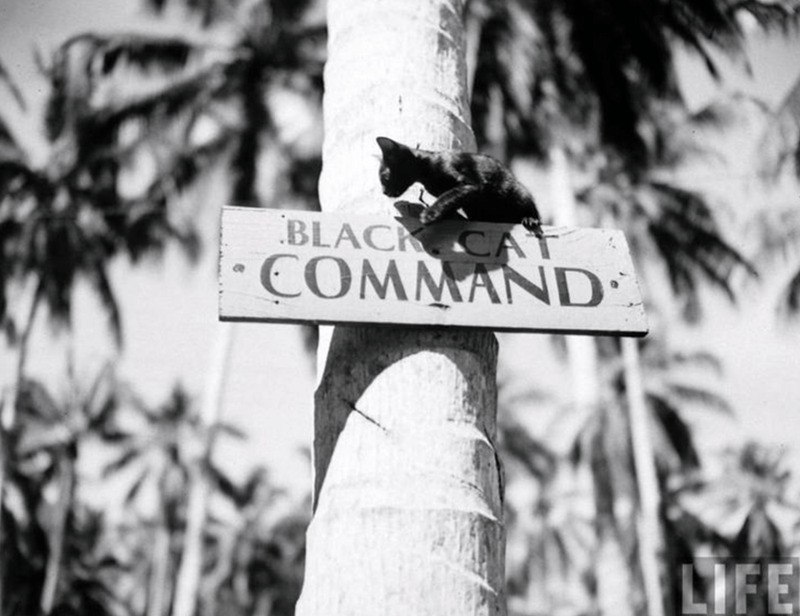 Tree - BLACK CAAT COMMAND LIFE