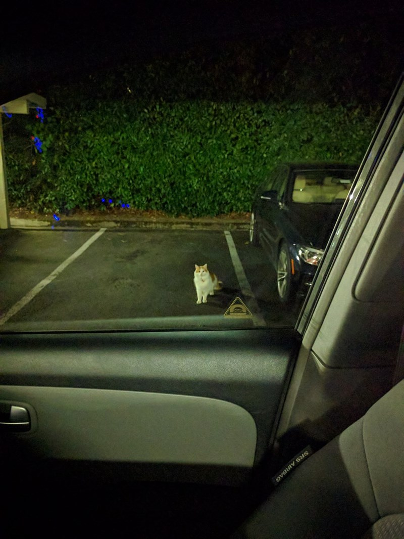 cat saving parking spot