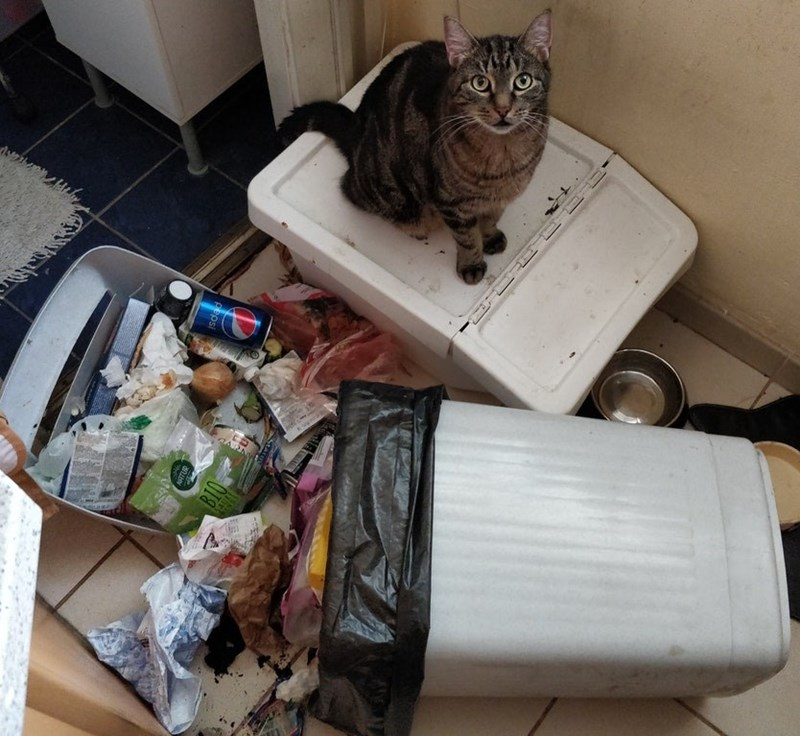 cat standing next to tipped over trash can