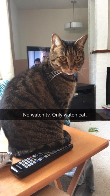 snapchat of cat sitting on the tv remote