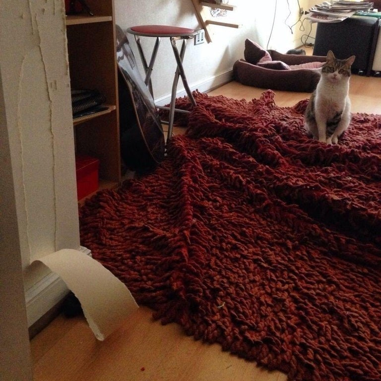 cat next to ruined wallpaper and rug