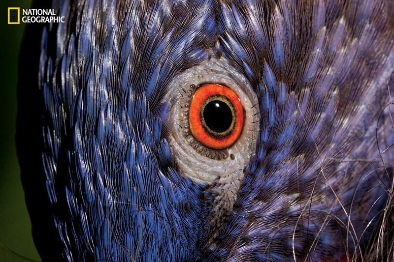 eye of a rainbow lorikeet