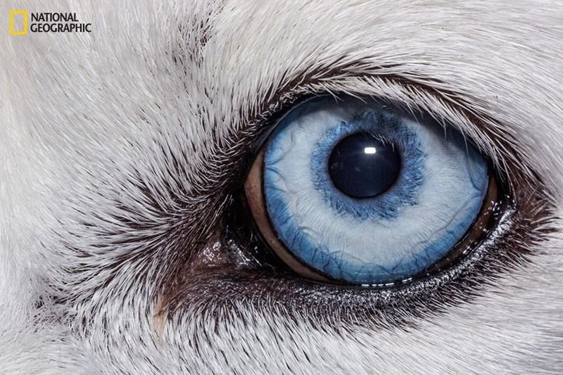 domestic dogs eyes close up