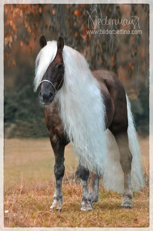 Horse - Nederway