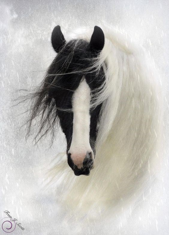 Mysterious horse with lovely white mane