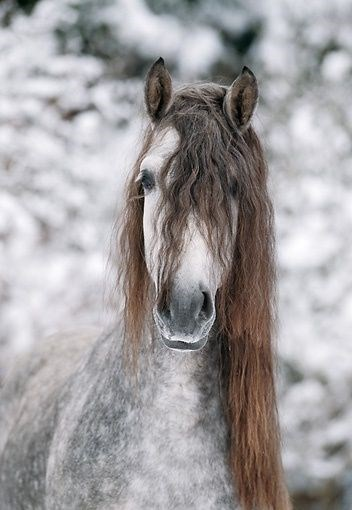 horse with hairstyle of just got out of the shower