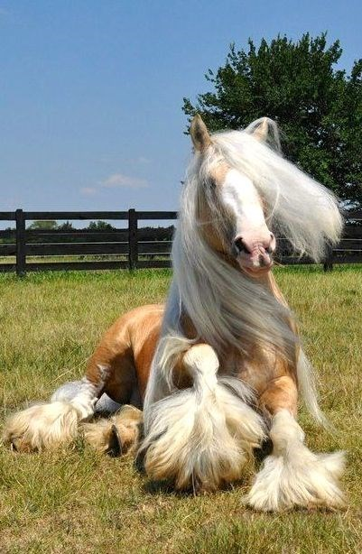 Horse hair in the field
