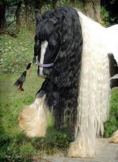 horse with pony tails