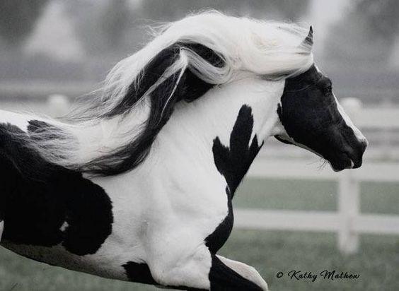 beautiful horse with white hair running