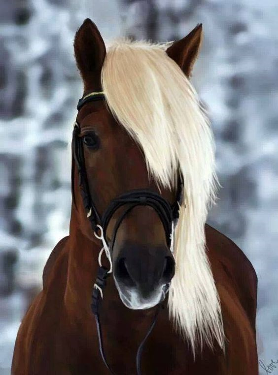 Brown horse with white hair in the snow