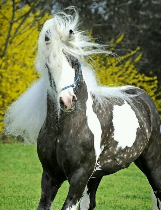that white hair horse with yellow and green background
