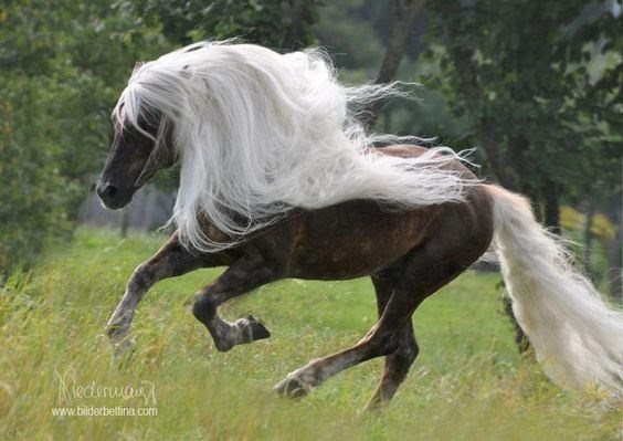 Horse running in a field with majestic white hair