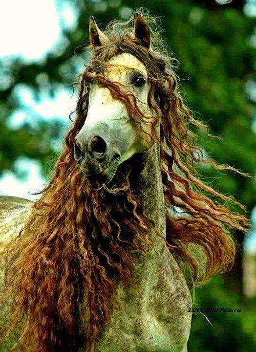 Cute horse with curly hair
