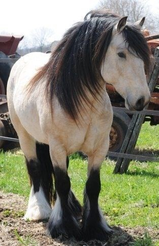 Horse with big hooves