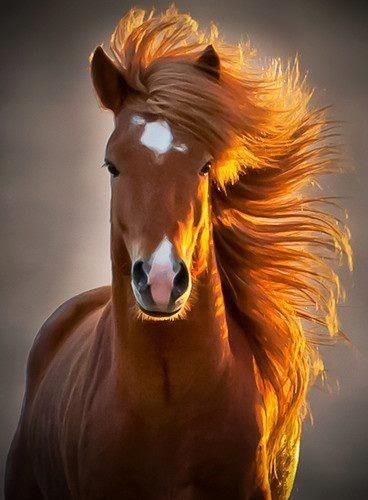 golden brown horse with beautiful hair
