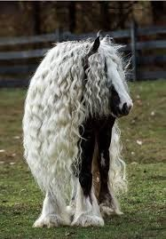 horse with amazing hair