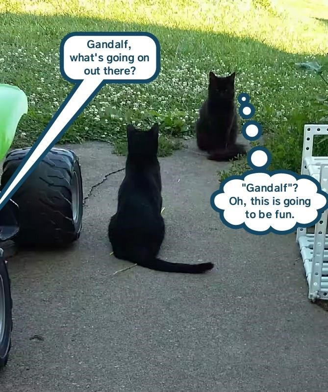 meme of black cats