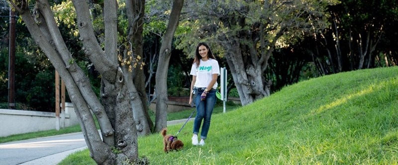 Woman wearing WAG shirt walking a dog