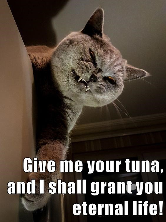 Vampire cat is prepared to trade eternal life in exchange for some tuna