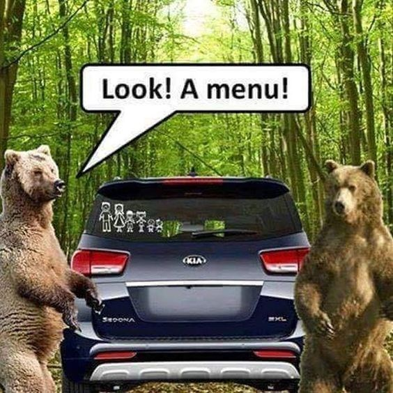 animal meme - bears - Look! A menu! KIA 3eooNA