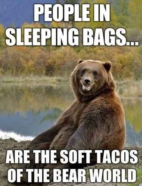 animal meme - Grizzly bear - PEOPLE IN SLEEPING BAGS... ARE THE SOFT TACOS OF THE BEAR WORLD