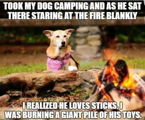 animal meme - Dog breed - TOOK MY DOG CAMPING AND AS HE SAT THERE STARING AT THE FIRE BLANKLY TREALIZED HE LOVES STICKS.O WAS BURNING AGIANT PILE OF HIS TOYS