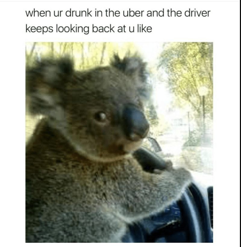 Koala - when ur drunk in the uber and the driver keeps looking back at u like