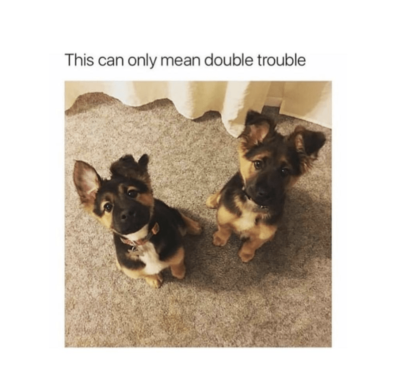 Dog - This can only mean double trouble