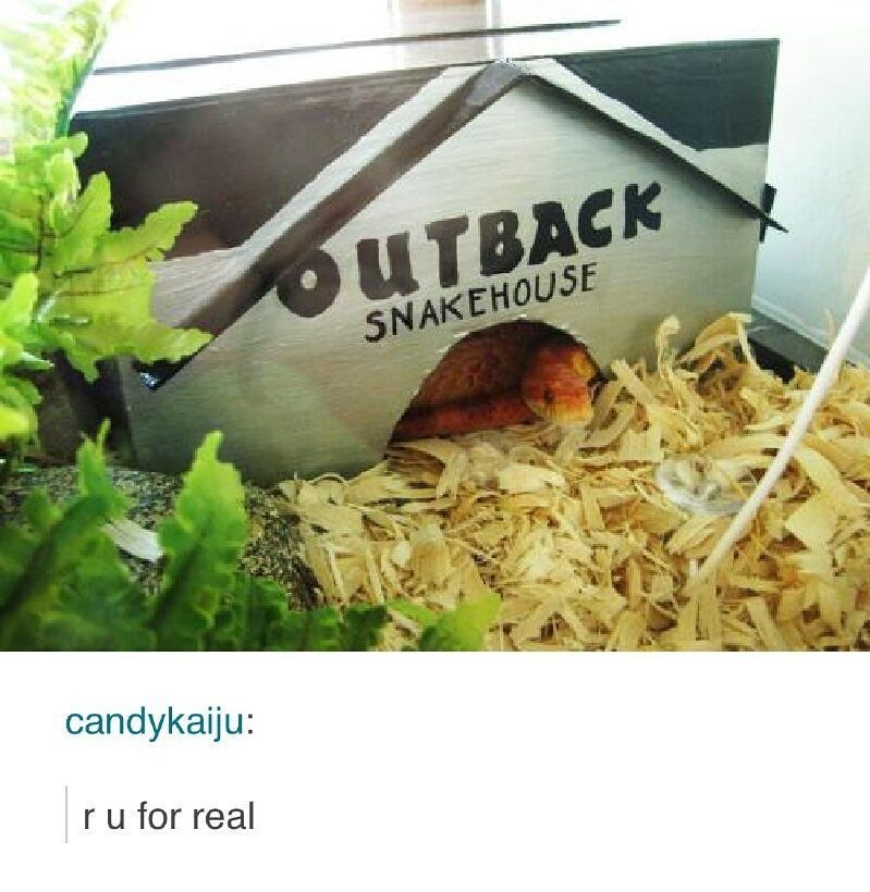 "Funny meme about naming your snake's home ""outback snakehouse."""