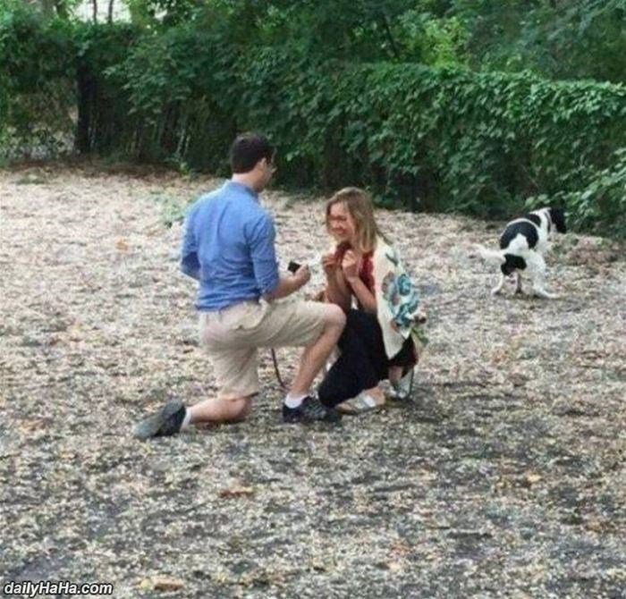 excited dogs marriage proposal - 9067121408