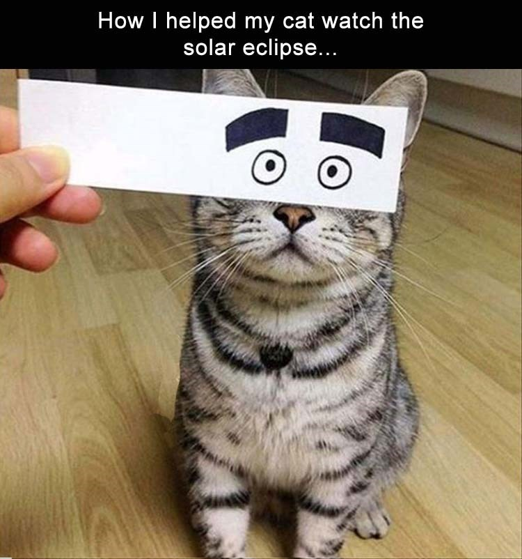photo of cat covering his eyes from the solar eclipse