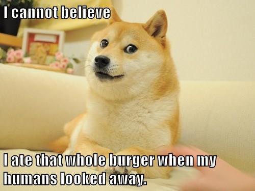 Cheezburger Image 9067221248