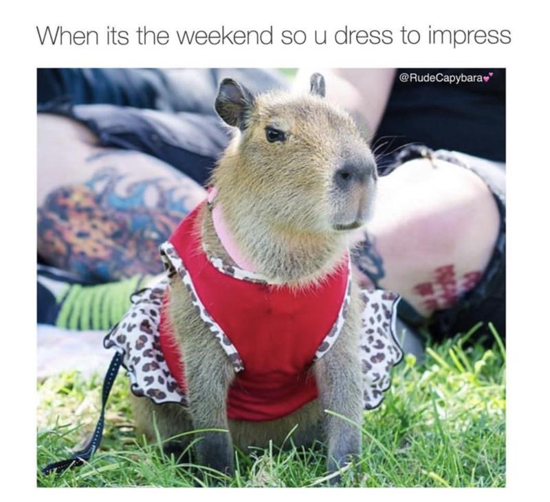 meme of dressing to impressing