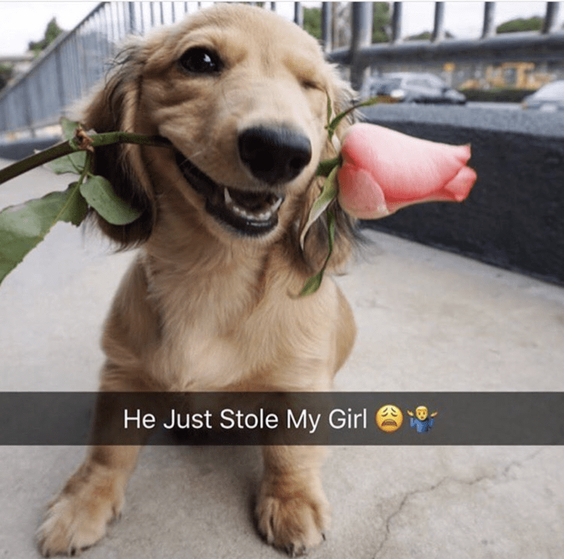dog with flower meme