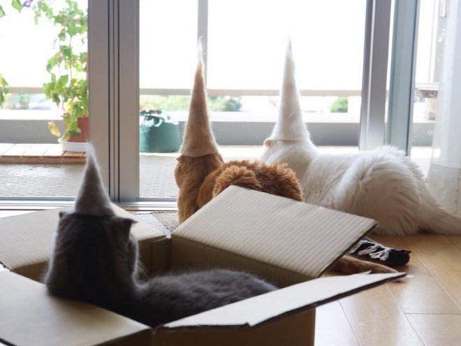 cat - Furniture