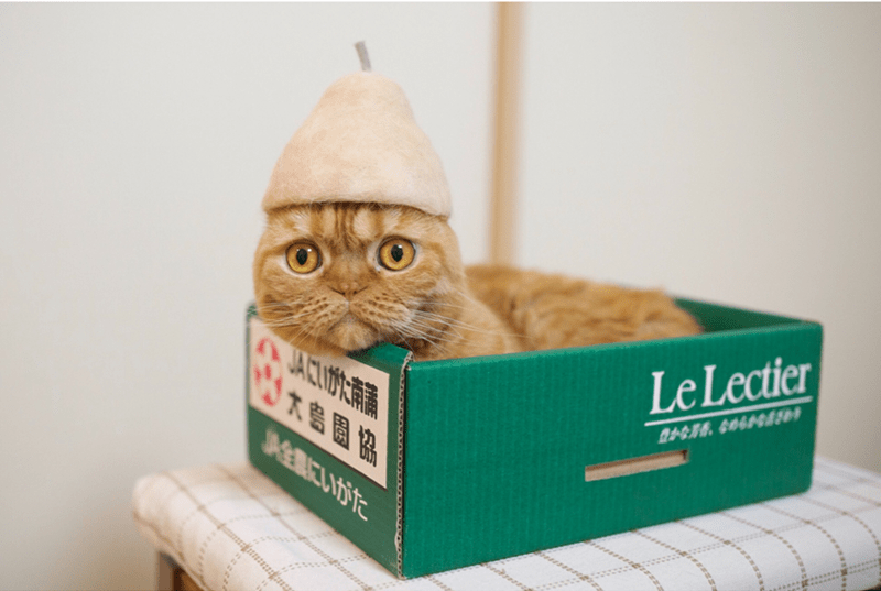 cat - Cat - Le Lectier JALLIOR JAGBCUIE