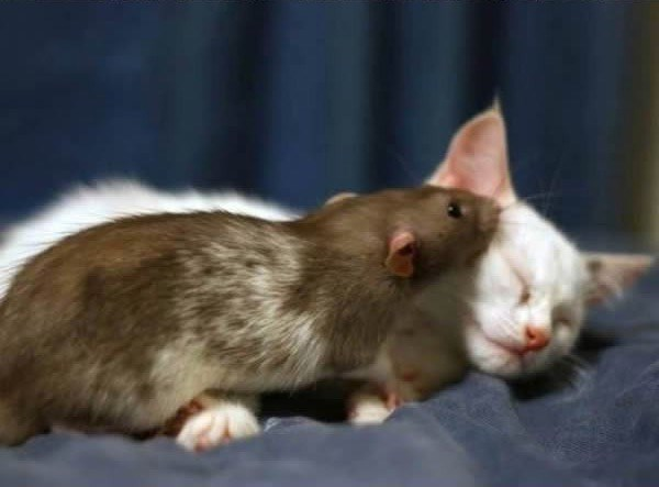 friends for mice