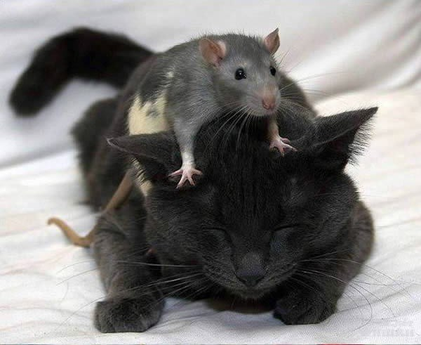 cat and mouse - Mammal