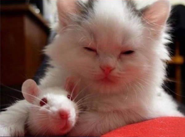 cat and mouse - Cat