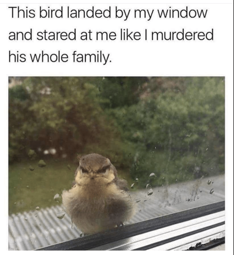 Adaptation - This bird landed by my window and stared at me like I murdered his whole family.