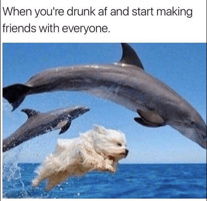 Bottlenose dolphin - When you're drunk af and start making friends with everyone.