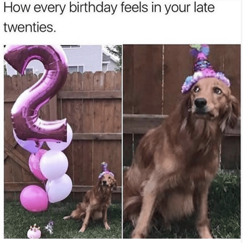 Dog - How every birthday feels in your late twenties.